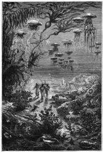 Paysages sous marins de l'ile Crespo