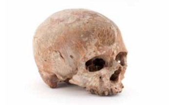 Crâne de Cro-Magnon ©mhnh Jean-Christophe Domenech
